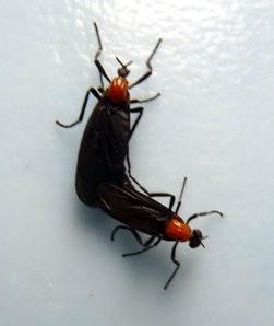 lovebugs0529lc